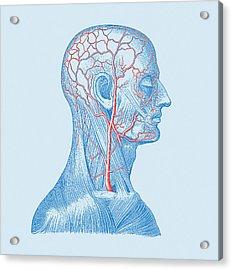 Head Veins Acrylic Print by Mehau Kulyk