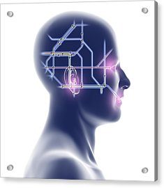 Head With Network Diagram Acrylic Print by Pasieka