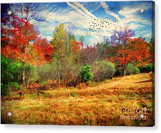 Heading South Acrylic Print by Darren Fisher
