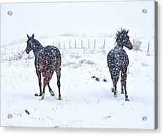 Heading To The Hills Acrylic Print by Betsy Knapp