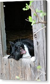 Hear Me Roar Acrylic Print by Deb Kline