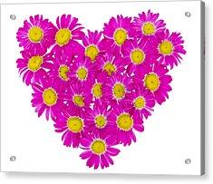 Heart From  Pink Daisies Acrylic Print by Aleksandr Volkov
