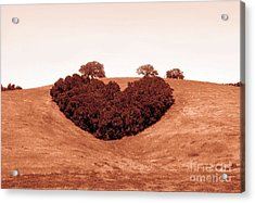 Acrylic Print featuring the photograph Heart  by Michael Rock
