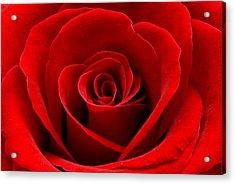 Heart Rose Acrylic Print by Dawn Black