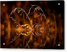 Acrylic Print featuring the photograph Heartbeat by Vicki Pelham