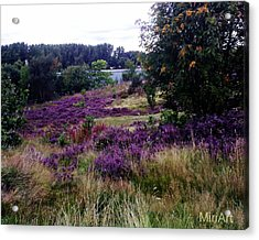 Heathers On The Moor 2011 Acrylic Print by Miriam Shaw