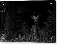 Acrylic Print featuring the photograph Hello Deer by Cheryl Baxter
