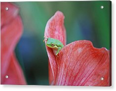 Acrylic Print featuring the photograph Hello by Kathy Gibbons