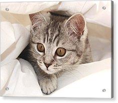 Hello Kitten Acrylic Print by Claudia Moeckel