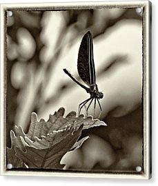 Hello Monochrome Acrylic Print by Steve Harrington