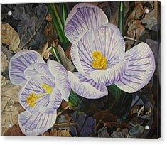 Heralds Of Spring Acrylic Print