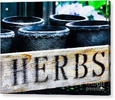 Herb Pots Acrylic Print by Colleen Kammerer