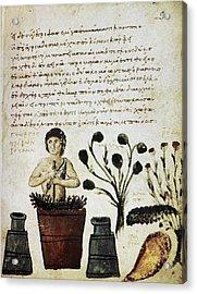Herbal Medicine, 10th Century Acrylic Print