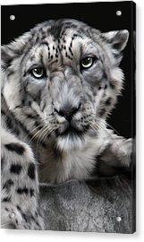 Hercules Acrylic Print by Big Cat Rescue