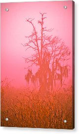Here I Stand Acrylic Print by Carolyn Marshall