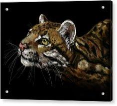 Here Kitty Kitty Acrylic Print by Lakota Phillips