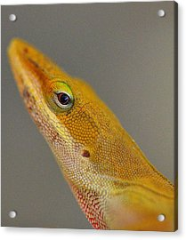 Acrylic Print featuring the photograph Here Lizard Lizard by Tanya Tanski