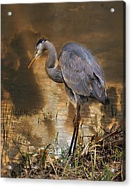 Heron Bronze Acrylic Print by Marty Koch