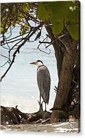 Heron Acrylic Print by Jane Rix