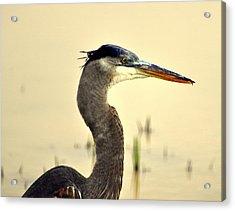 Heron One Acrylic Print by Marty Koch