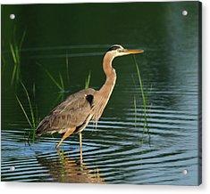 Heron Sunrise Acrylic Print