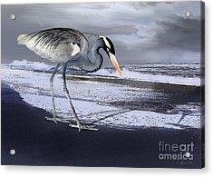 Heron Taking His Afternoon Beach Walk Acrylic Print by Danuta Bennett