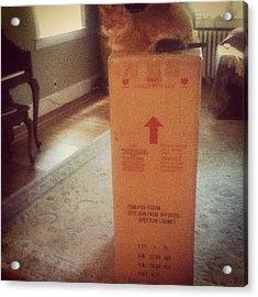He's On Top Of The World #kitty #box Acrylic Print