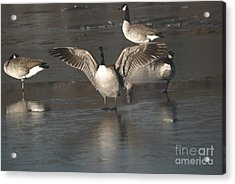 Acrylic Print featuring the photograph Hey Over Here by Mark McReynolds