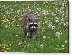 Hey What You Got There Acrylic Print