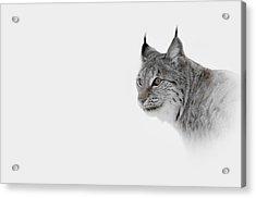 Hi Key Lynx Acrylic Print by Andy Astbury