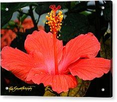 Hibiscus Bowl Acrylic Print by Ruth Bodycott