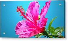 Hibiscus Crystal Luster Acrylic Print by Gwyn Newcombe
