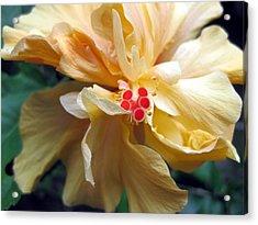Hibiscus Dancer IIn Yellow Acrylic Print