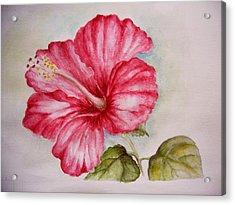 Hibiscus Flower Acrylic Print by Draia Coralia