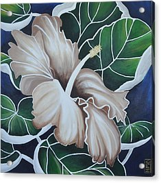 Hibiscus Acrylic Print by Holly Donohoe