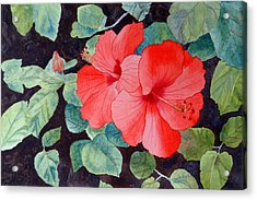 Acrylic Print featuring the painting Hibiscus by Laurel Best