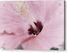 Acrylic Print featuring the photograph Hibiscus Moments by Janie Johnson