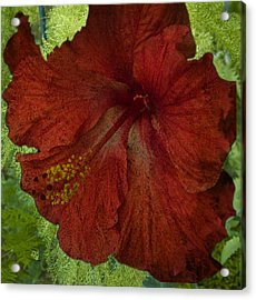 Hibiscus Plus Fern Acrylic Print by Barbara Middleton