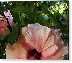 Hibiscus Seclusion Acrylic Print