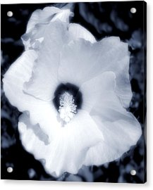 Hibiscus Seduction Acrylic Print