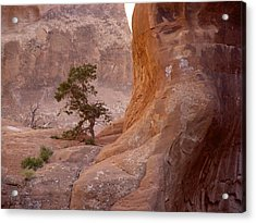 Hidden Curves Of Arches Acrylic Print by Ramie Liddle