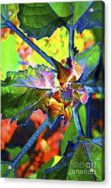 Hidden In Color Acrylic Print by Gwyn Newcombe