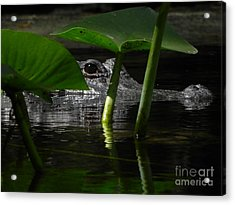 Hide And Seek You Acrylic Print by Jack Norton