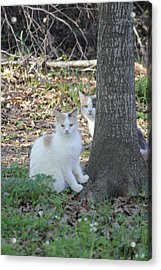 Acrylic Print featuring the photograph Hide 'n Seek by Rdr Creative