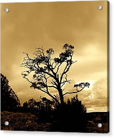 High Country Tree Acrylic Print by FeVa  Fotos