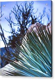 High Desert Cactus Acrylic Print by Jeffery Reynolds