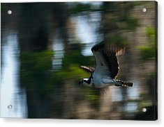 High Speed Pass Acrylic Print by Frank Feliciano