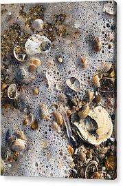 High Tide Line Acrylic Print by Adrian Bicker
