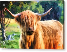 Highland Bull Acrylic Print by Dave Nielsen
