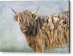 Highland Cattle Acrylic Print by Louise Heusinkveld